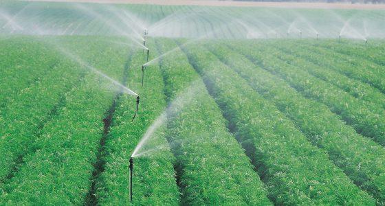 Nawadnianie upraw polowych